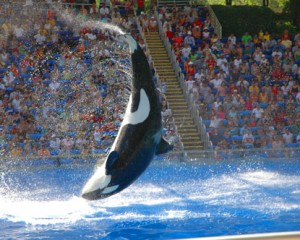 florida-sea-world-orlando