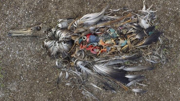 uccello-ripieno-di-plastica