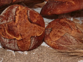 Altamura Italian Fresh Bread and Wheat Seeds
