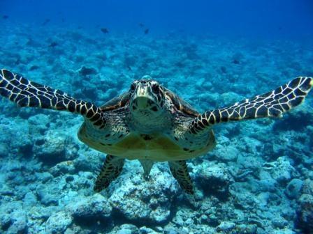 tartarughe-marine1