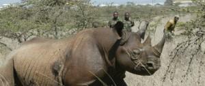 Uccidere-rinoceronti-per-salvare-rinoceronti