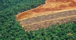 regenwald-rodung-viren-pandemien-beguenstigen-fors