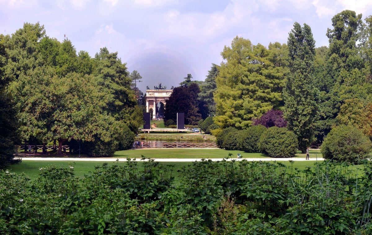 Alberi a Milano, Parco Sempione