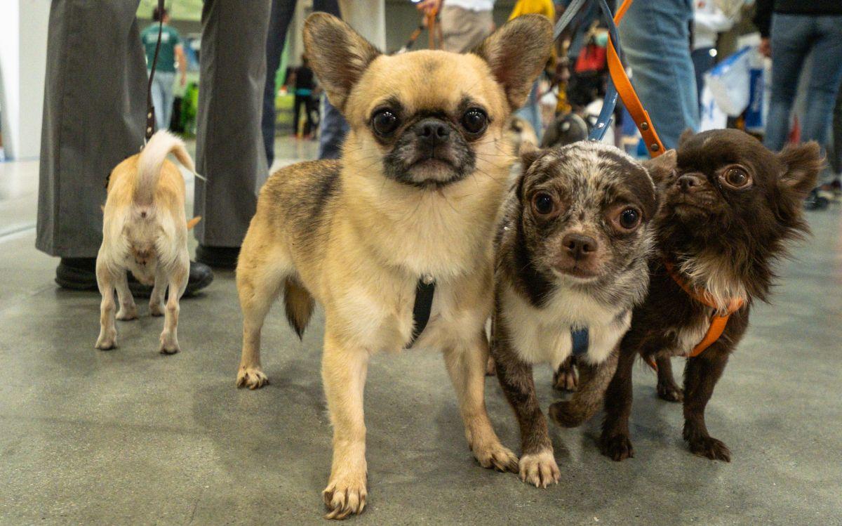 Pets in the City EXPO Fiera Milano city