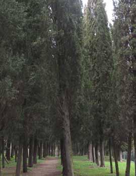 alberi33.jpg