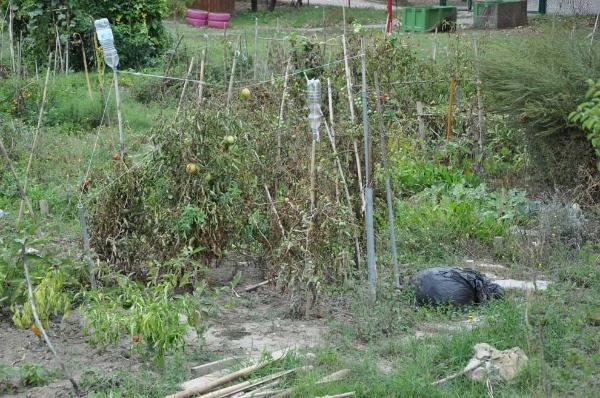 orto-agronomo