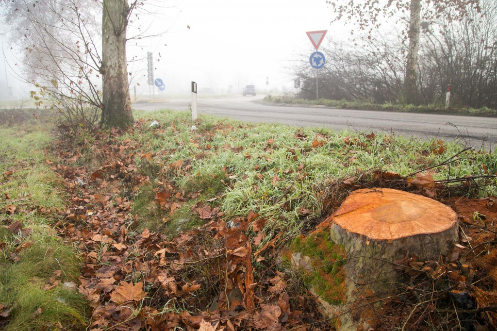 2015 12 29 Folli abbattimento alberi via mantova-3