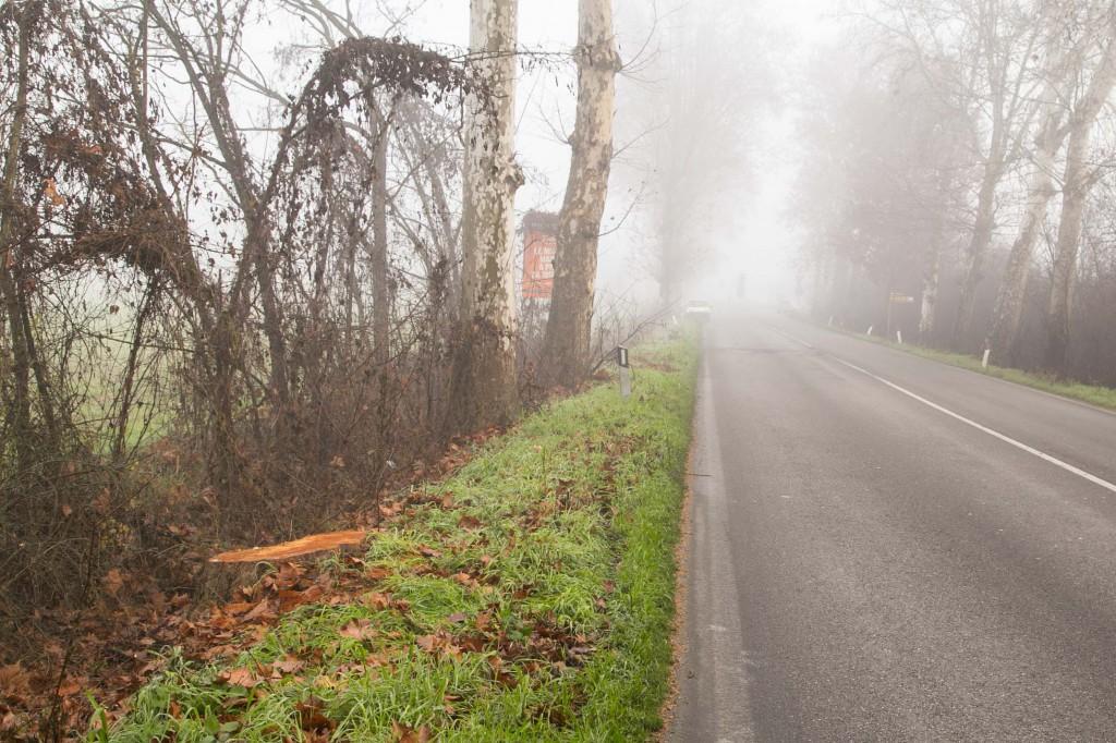 2015 12 29 Folli abbattimento alberi via mantova-5