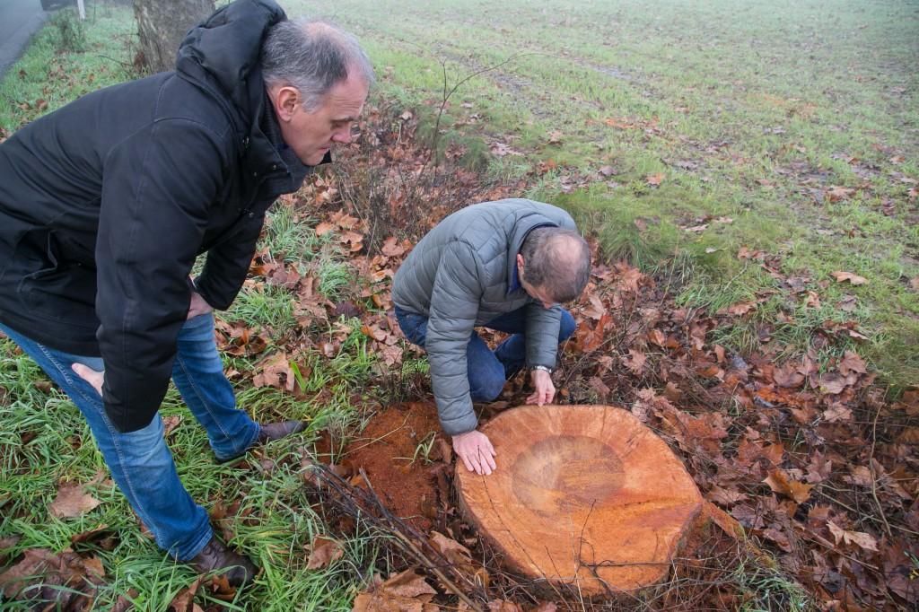 2015 12 29 Folli abbattimento alberi via mantova-7
