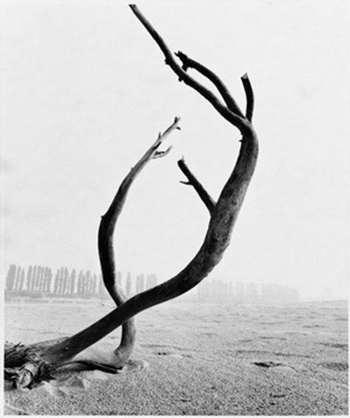 stanislao_farri_alberi_10