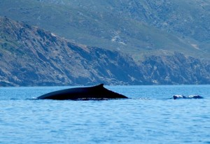 balenablog