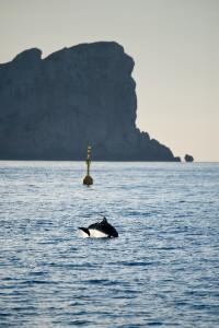 Un delfino e sullo sfondo, la sagoma inconfondibile di Capo Caccia