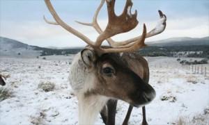 ReindeerCairn4