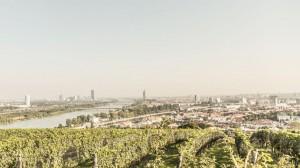17.04.08 Panorama di Vienna da colline vinicole - Copia
