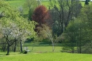 17.06.28 Zona Faakersee (Regione Villach, Carinzia) - Copia