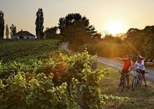 Radfahren in der Radregion Bad Radkersburg