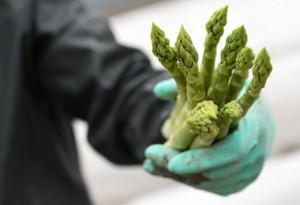 20.04.06 Agricoltura, asparagi, mancanza di manodopera straniera