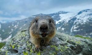 20.08.22 Marmotta