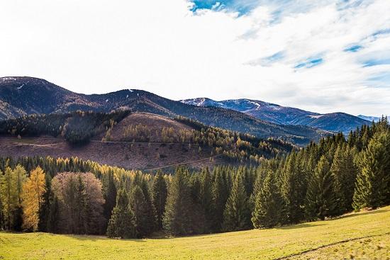 20.12.28 la foresta attorno alla Stüblergut 1 - Copia