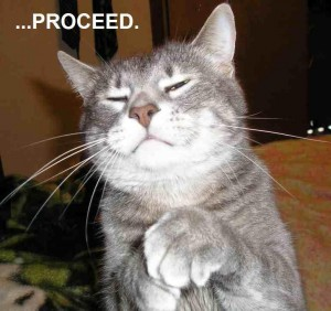 LOL-CATS-proceed