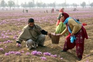 agricoltura-crescono-imprese-immigrati-in-ultimi-anni-1[1]