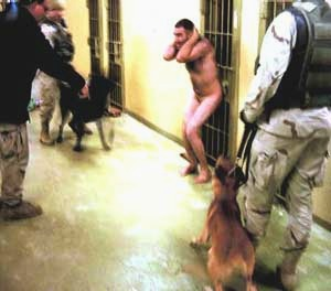AbuGhraibDogs