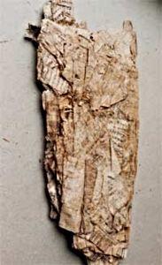 Papiro_Artemidoro2