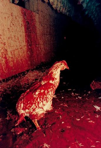 Dal Gal - Chicken Story 3