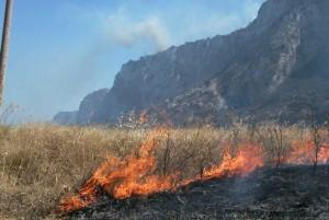 L'incendio nella riserva di Capo Gallo