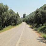 A gli olivi lungo il lago di Nicea