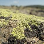 il lichene verde - Copia