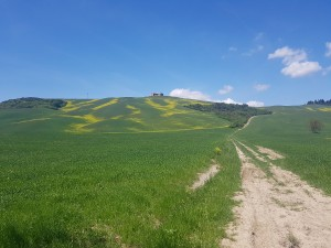 orcia low (1)