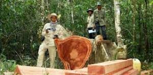Chut Wutty documentava i tagli illegali di alberi