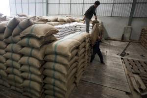 Sacchi di riso acquistati in blocco dal governo
