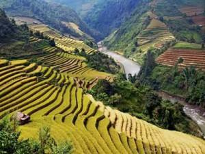 thai campi di riso