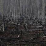 foreste bruciate