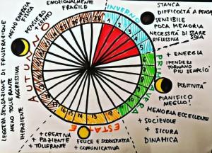 Il ciclo ovarico - Tratto dalla pagina Fb Zona Pelvica