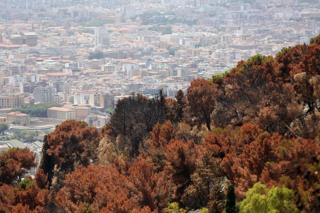 Monte Pellegrino bruciato