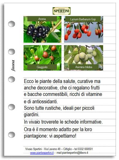 I frutti di marzo - Newsletter dal Vivaio Spertini