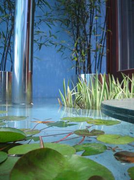 Vasca con piante acquatiche - Foto di proprietà di Patrizia Pozzi