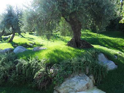 A Stresa...un giardino sul Lago Maggiore - Foto di proprietà di Patrizia Pozzi