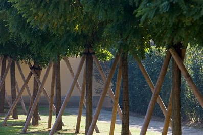 Il verde condiviso, filare - Foto di Patrizia Pozzi