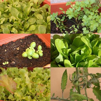 """Verdure...da balcone! - dal sito """"www.relilax.com"""""""