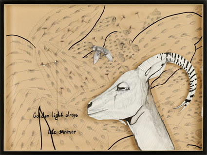 Scatola-Entomologica-Grrek-Goat