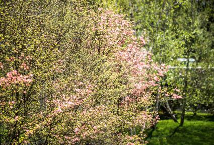 Giardini-sospesi-45