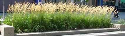 338042f15fffe433b8fe050a1fdf422f--karl-grass