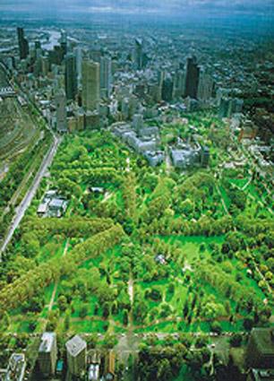 UrbanForeststrategy