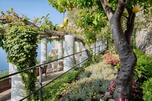 Sulla Passeggiata del Monaco del Grand hotel Convento, un albero di limoni sfusati amalfitani (IGP)
