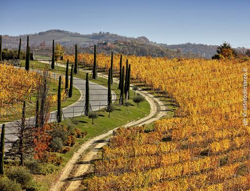La strada d'accesso, punteggiata da cipressi, de Il Boscareto