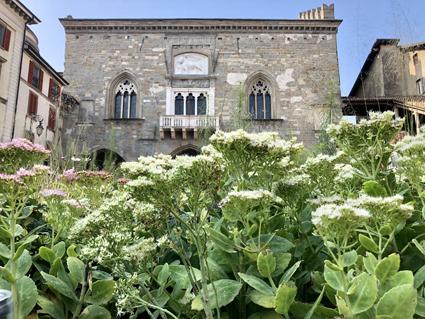 I Maestri del Paesaggio '18, Bergamo, la Green Square di Piet Oudolf (foto A. Corbetta)